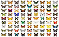 Butterfly Royalty Free Stock Image - 10162726