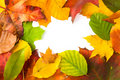 Autumn Leaves Royalty Free Stock Photography - 10176057