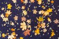 Autumn Leaves Background. Fallen Leaves In Autumn On The Asphalt. Background Of Autumn Leaves. Stock Images - 101885854