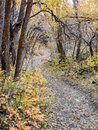 Autumn Fall Forest Views Hiking Through Trees On The Rose Canyon Yellow Fork And Big Rock Trail In Oquirrh Mountains On The Wasatc Royalty Free Stock Photo - 101903175