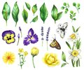Watercolor Floral Set Royalty Free Stock Photo - 102023325