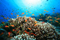 Coral Reef And Tropical Fish Stock Photography - 10216902