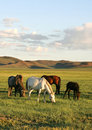 Herd Of Horses Stock Photos - 10217153
