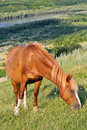 Brown Horse Stock Images - 10217904