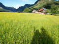 Shadow On The Meadow  Royalty Free Stock Photos - 10225908