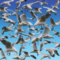 Seagulls Stock Images - 10227734