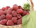 Raspberries Stock Images - 10238814
