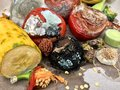 Different Sorts Of Rotten Fruits And Vegetables On Gray Paper I Stock Images - 102338464