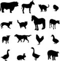 Livestock And Poultry Royalty Free Stock Images - 10262309