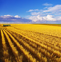 The Midday On Fields Of Montana Stock Photography - 10277642
