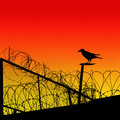Barbwire Royalty Free Stock Photo - 10290175