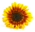 Yellow Flower Royalty Free Stock Image - 10318406