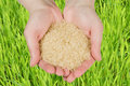 Rice In Woman's Hands Stock Photography - 10326862