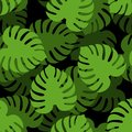 Monstera Seamless Pattern. Tropical Leaves Background. Palm Text Stock Images - 103237644
