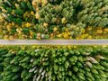 Road In The Autumn Forest Aerial View Royalty Free Stock Photo - 103335945