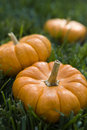 Small Pumpkins Stock Photos - 10347293