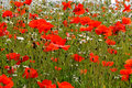 Spring  Meadow Stock Images - 10356614