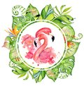 Pink Flamingo Watercolor Hand Drawn Illustration In Arrangement With Green Tropical Plants, Exotic Monstera And Banana Leafs Stock Photography - 103997032