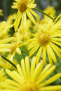 Summer Flowers Stock Photography - 1041312