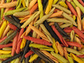 Pasta Italian Gargollini With Vegetables And Spice Royalty Free Stock Images - 10404289