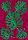 Tropical Leaf Monstera Plant Isolated On Red Texture  Background. Vector Illustration Stock Image - 104028281