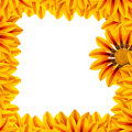 Golden Flower Frame Stock Photo - 10422420