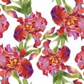 Watercolor Seamless Pattern With Colorful Flowers And Leaves On White Background, Watercolor Floral Pattern, Flowers In Stock Photo - 104257730