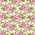 Watercolor Seamless Pattern With Colorful Flowers And Leaves On White Background, Watercolor Floral Pattern, Flowers In Stock Photo - 104257980
