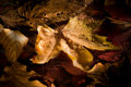 Autumn Leaves And Dew Royalty Free Stock Image - 10430176