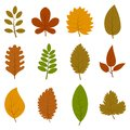 Set Of Twelve Different Autumn Leaves Isolated On White Background Royalty Free Stock Photo - 104318605