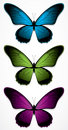 Colorful Butterflies Stock Photos - 10453993
