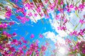 Flowers In The Sky With Clouds. Stock Photo - 104512190