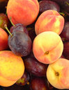 Plums And Peaches Royalty Free Stock Images - 10477669