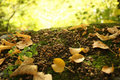 Autumn Gold Leaves Royalty Free Stock Image - 10487986