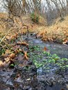 Late Fall Forest Stream Close Up, Views Hiking, Biking, Horseback Trails Through Trees On The Yellow Fork And Rose Canyon Trails I Royalty Free Stock Photo - 104818575