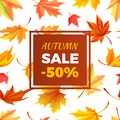 Autumn Sale -50 Off In Frame Leaves Foliage Stock Images - 104944384