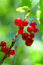 Red Currants Stock Photos - 1051953