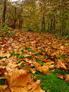 Autumn Royalty Free Stock Photography - 1054257