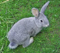 Rabbit Royalty Free Stock Photos - 10508198