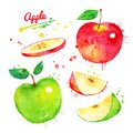 Watercolor Illustration Set Of Apples Royalty Free Stock Photos - 105004448