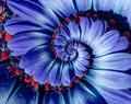 Blue Camomile Daisy Flower Spiral Abstract Fractal Effect Pattern Background. Blue Violet Navy Flower Spiral Abstract Pattern Royalty Free Stock Image - 105117296