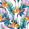 Watercolor Tropical Seamless Pattern With Bird-of-paradise Flower. Royalty Free Stock Photography - 105148477