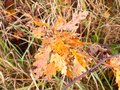 Beautiful Red Orange Yellow Autumn Dead Leaves Close Up Stock Photography - 105168402