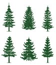 Green Pine Trees Collection Royalty Free Stock Image - 105341576