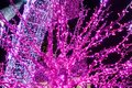 Trees And Archways Decorated With Glowing Purple Neons Stock Photography - 105382112