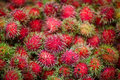 Rambutans Royalty Free Stock Image - 10567456