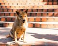 A Dog Stairs Sitting On An Orange Stone Stairs Stock Photos - 105686043