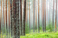 Mist Forest Royalty Free Stock Photos - 10571358