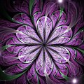 Purple Fractal Flower Royalty Free Stock Image - 106251796