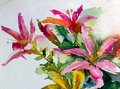 Watercolor Art Background Colorful Nature Summer Red Pink Flower  Blossom Lilies Garden Stock Image - 106431951